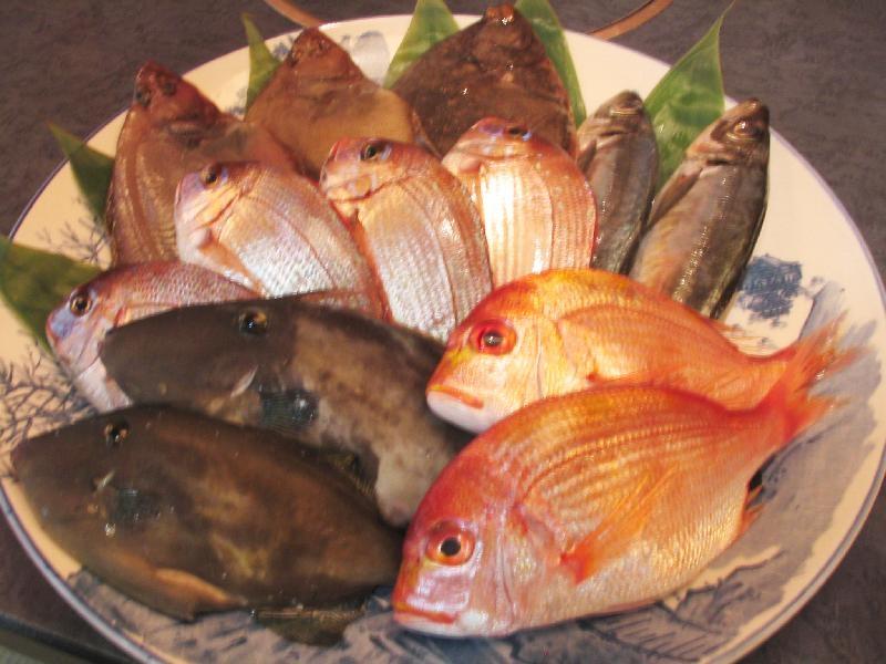 日本海の朝どれ魚
