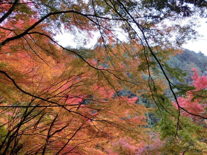 秋の野外研修7s