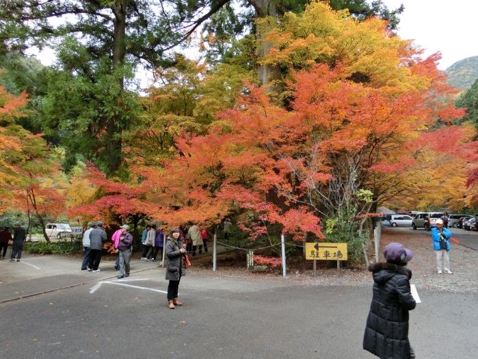 秋の野外研修3s