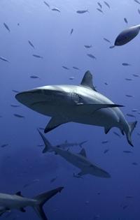 深海鮫肝油