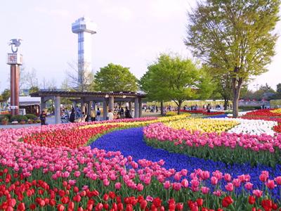 春:木曽三川公園チューリップ祭