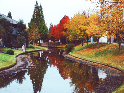 秋:パークセンターの秋