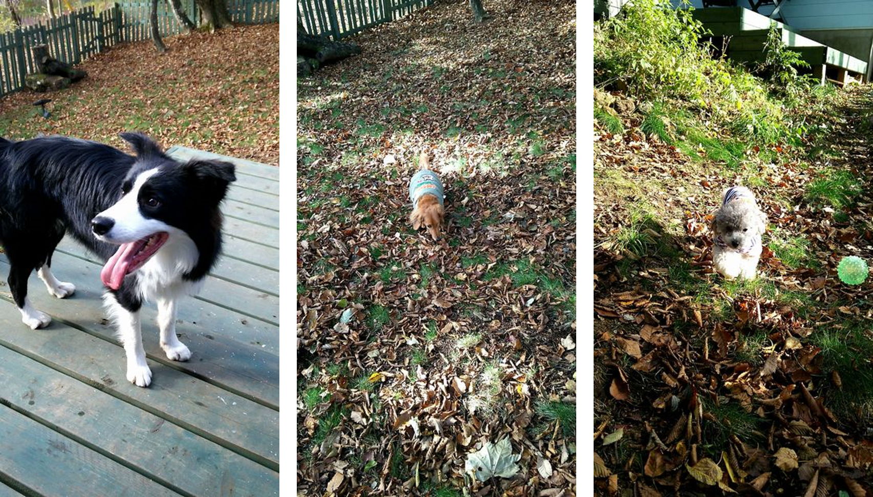 愛犬と宿泊できる 那須のプライベートドックラン付き貸別荘