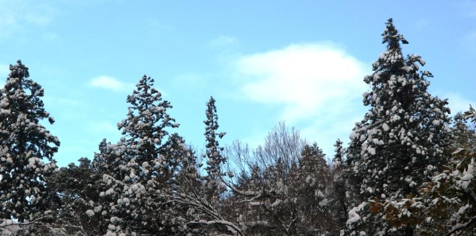 トップバナー冬景色