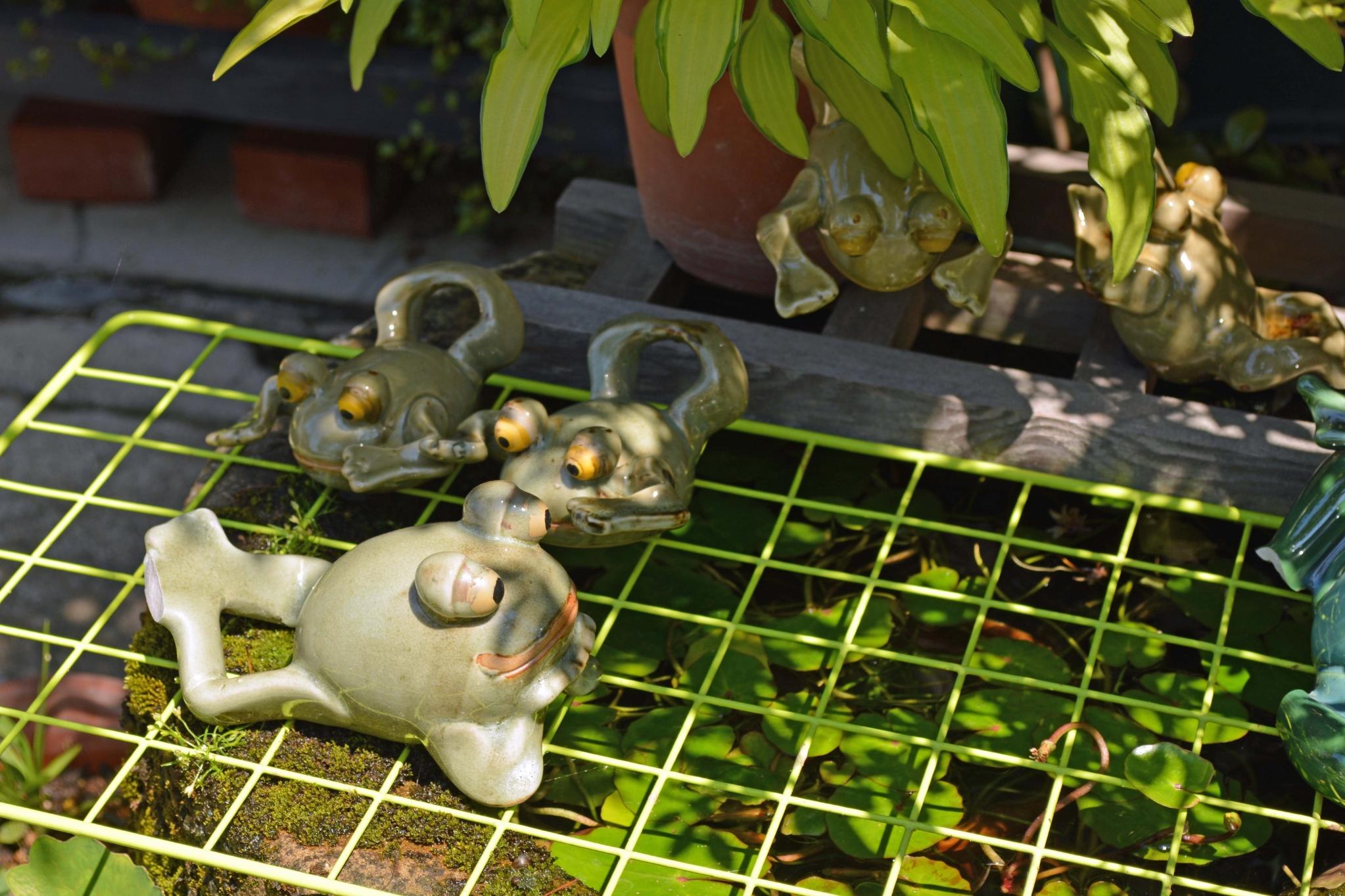 萩のカエル