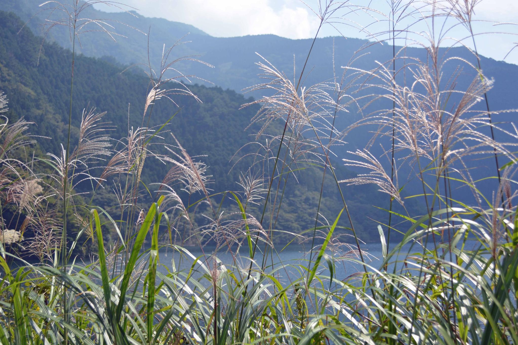富郷ダムの秋