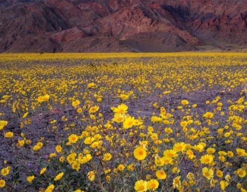 死の谷の花