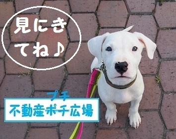 ホームページ子犬ちゃん