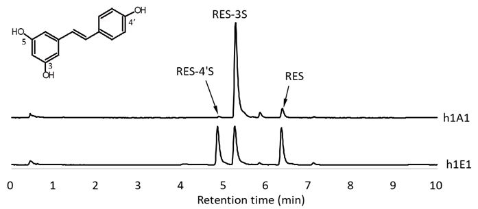 レスベラトール代謝プロファイル