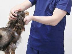 かみた動物病院 イメージ写真