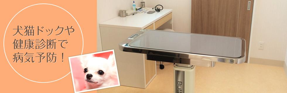かみた動物病院 犬猫ドックや健康診断で病気予防