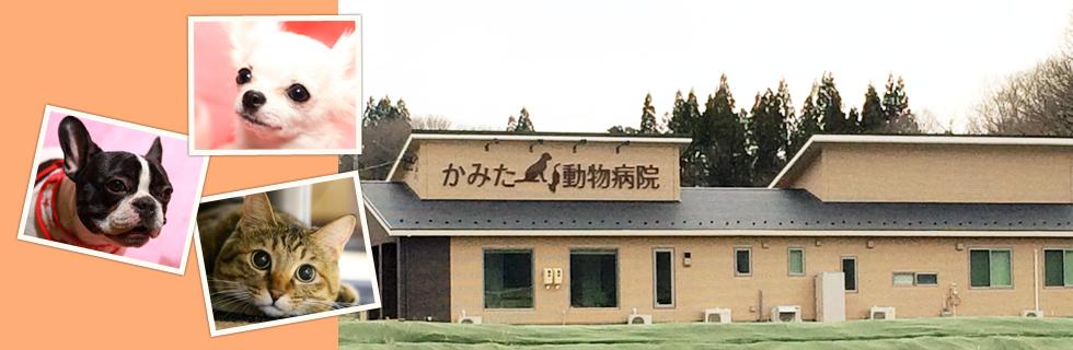 かみた動物病院