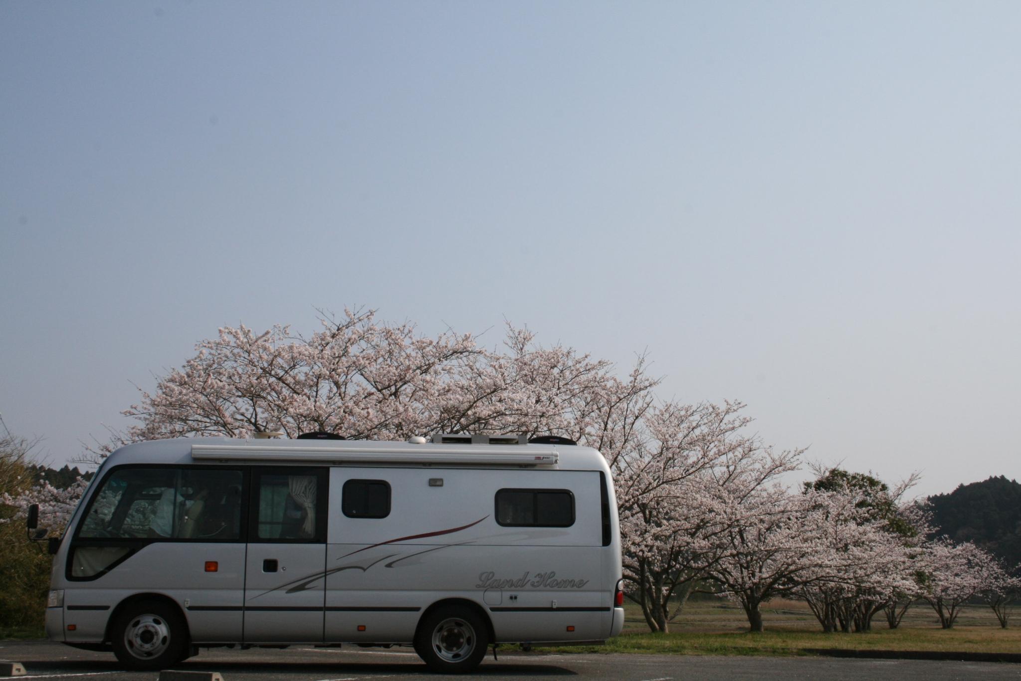 2018 トップ 桜