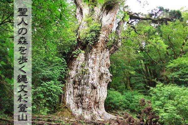 屋久島・聖人の森を歩く縄文杉登山