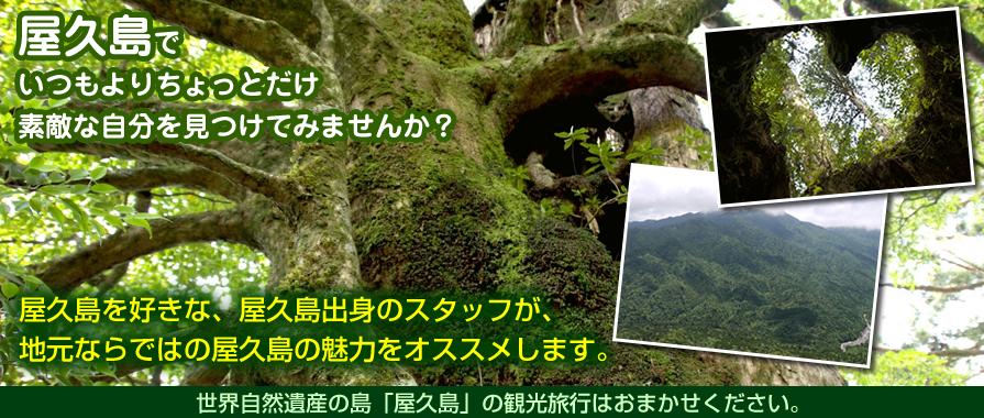 屋久島ツアー Leaf