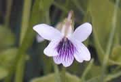 北部公園の野の花