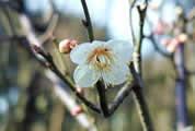 北部公園の樹木の花