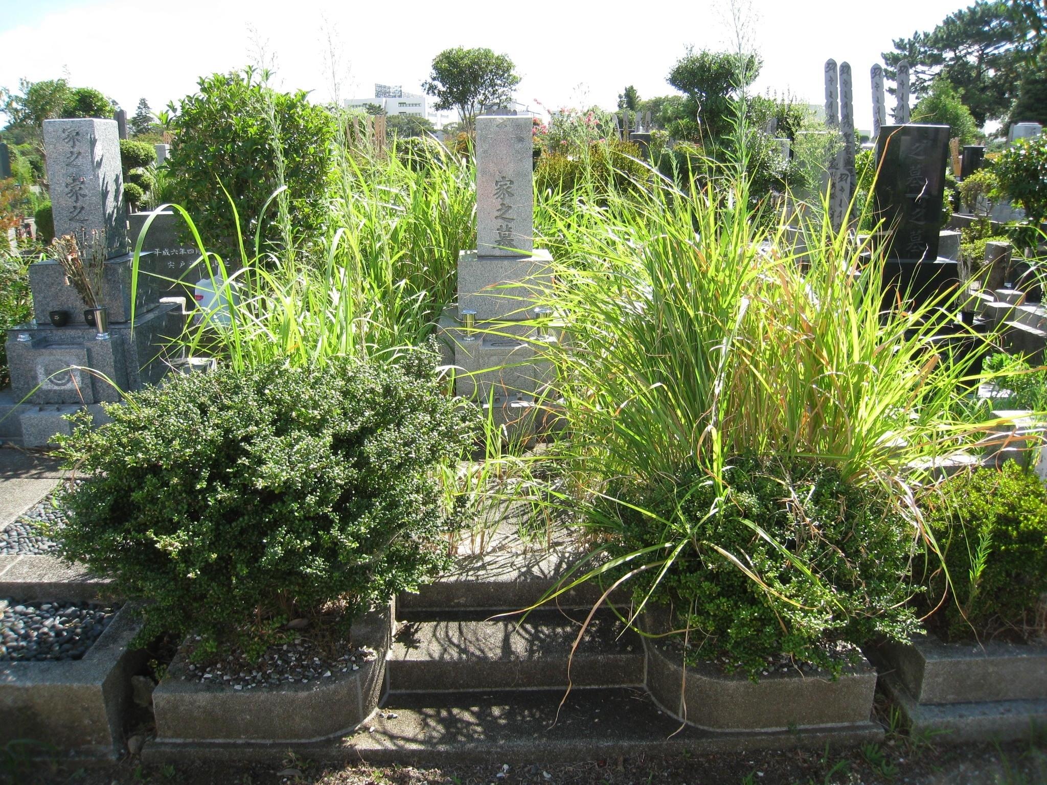 墓石クリーニングbefore