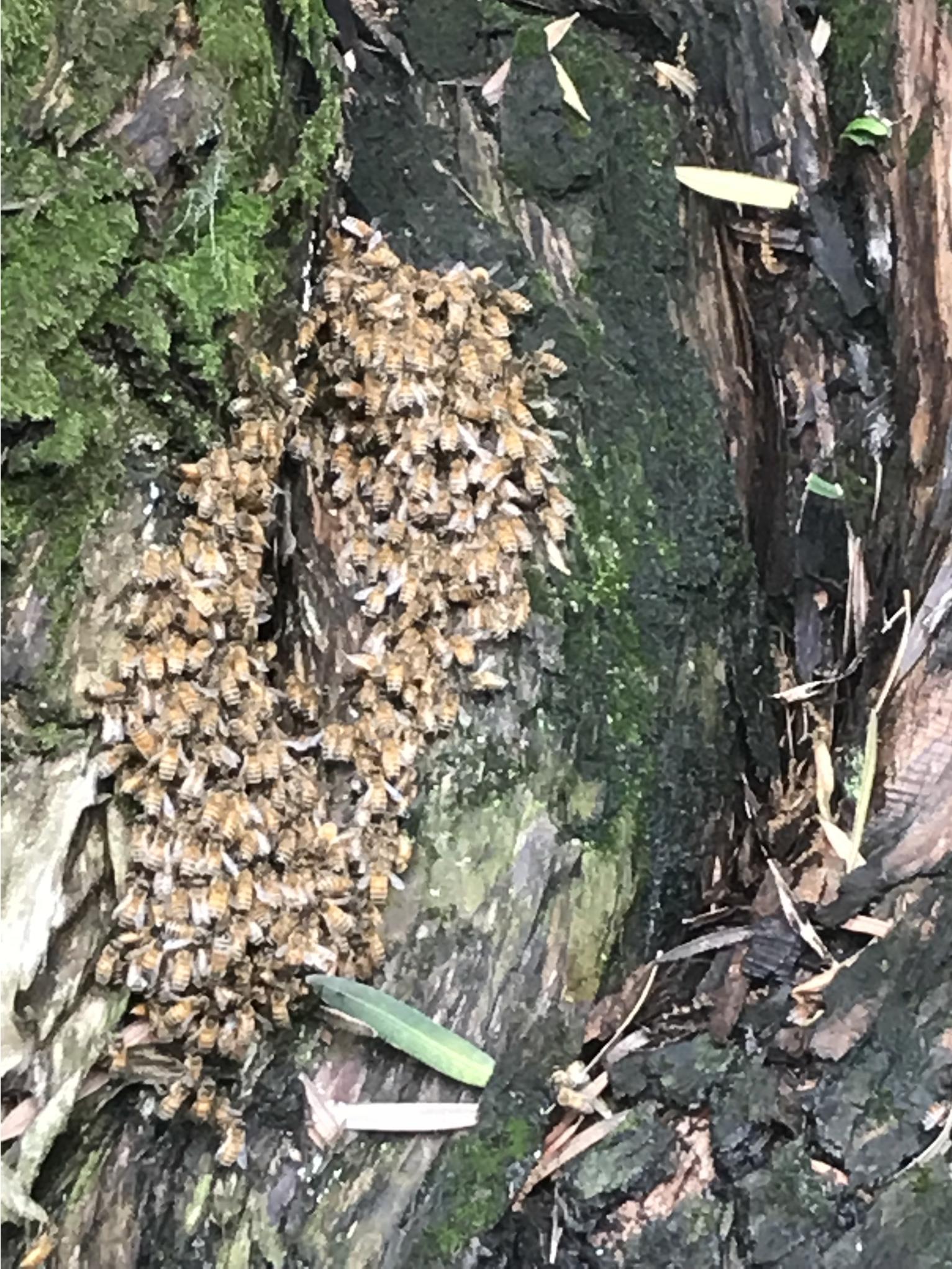 マキにハチ