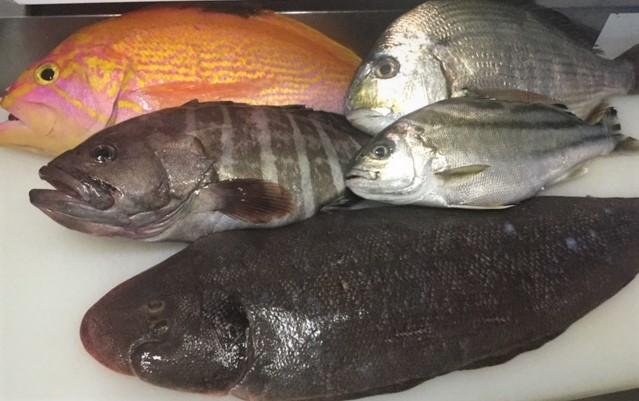 産地直送のお魚
