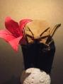 暗黒のヨーダから花を・・・