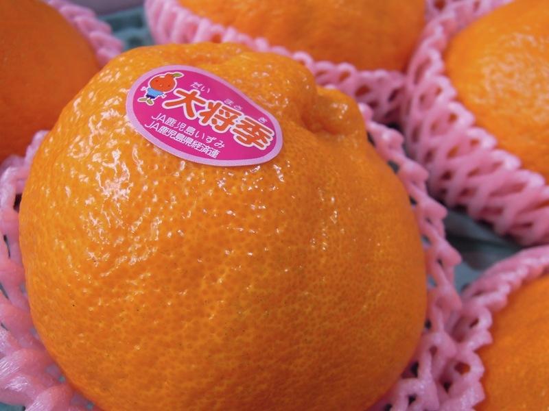 大将季 Today's Fruits ♪