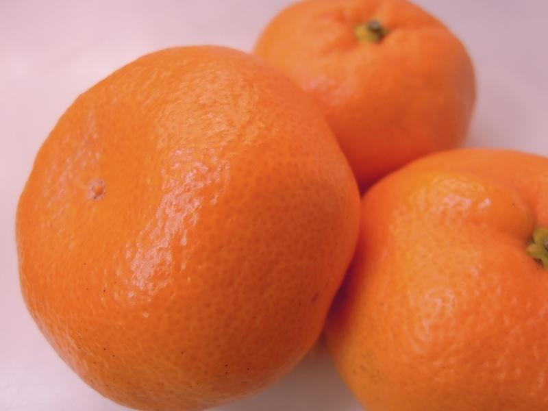 徳島・勝浦の「十万温州」 Today's Fruits ♪