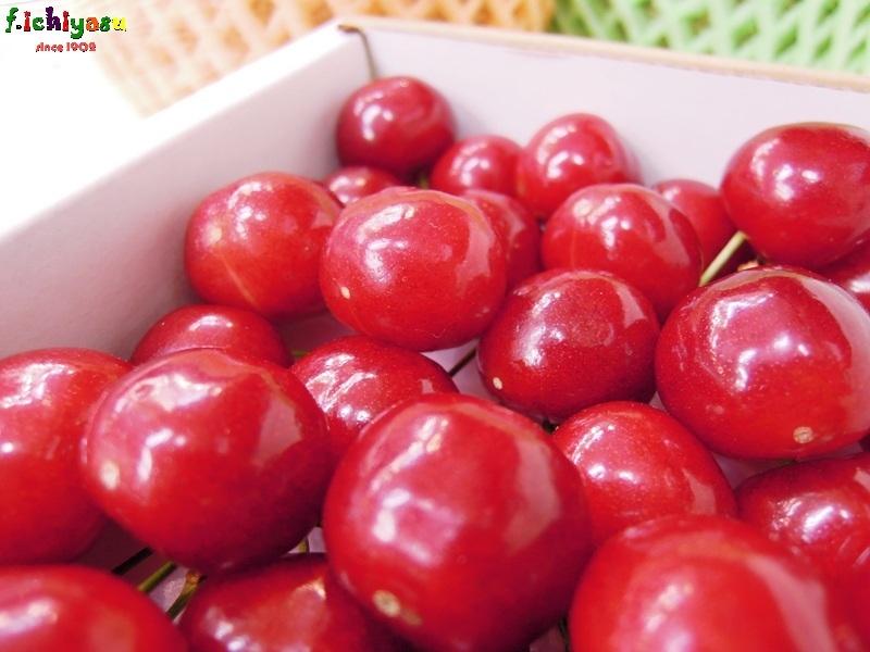 「紅佐藤錦」知ってる? Today's Fruits ♪