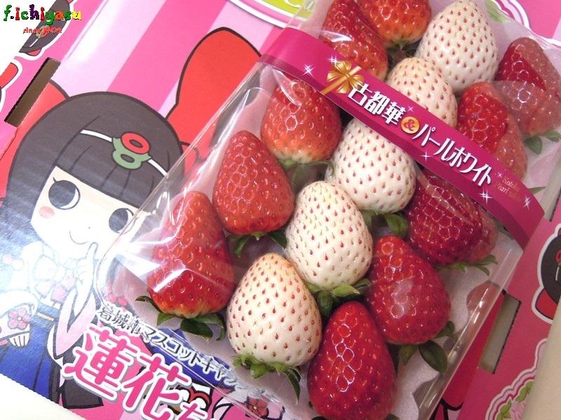 紅白イチゴ