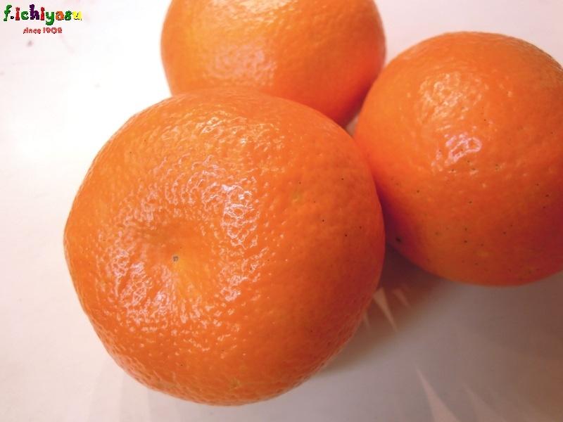 愛媛のいよかん、いい予感 ♪ Today's Fruits ♪