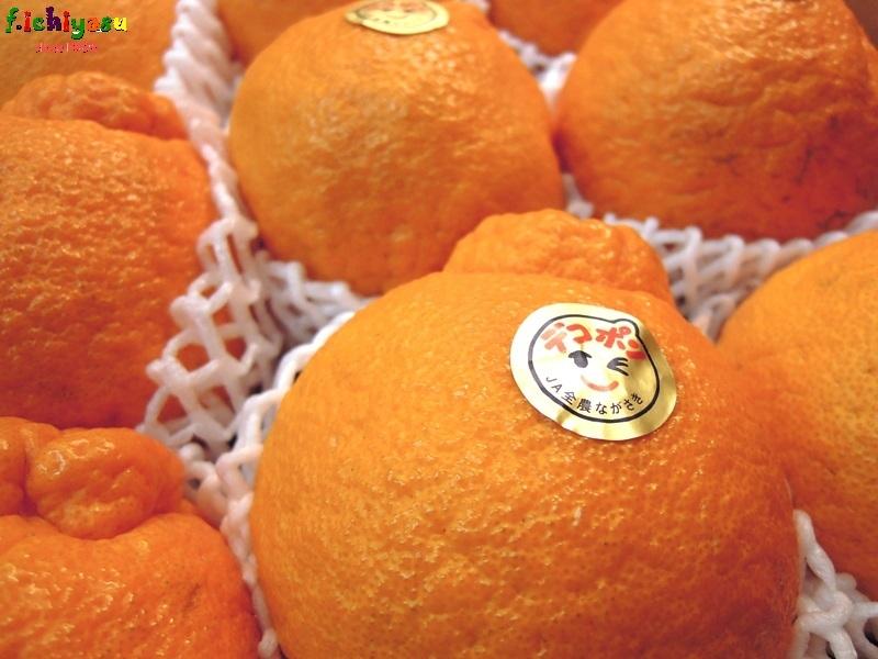 長崎の「デコポン」 Today's Fruits ♪