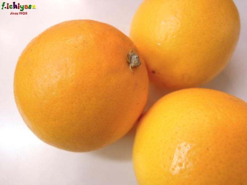 「マイヤーレモン」有り〼 Today's Fruits ♪