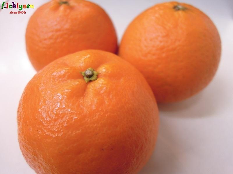 JA南さつま の「たんかん」 Today's Fruits ♪