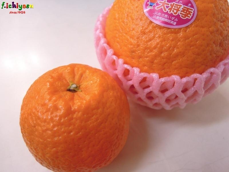 小さくても「大将季」 Today's Fruits ♪