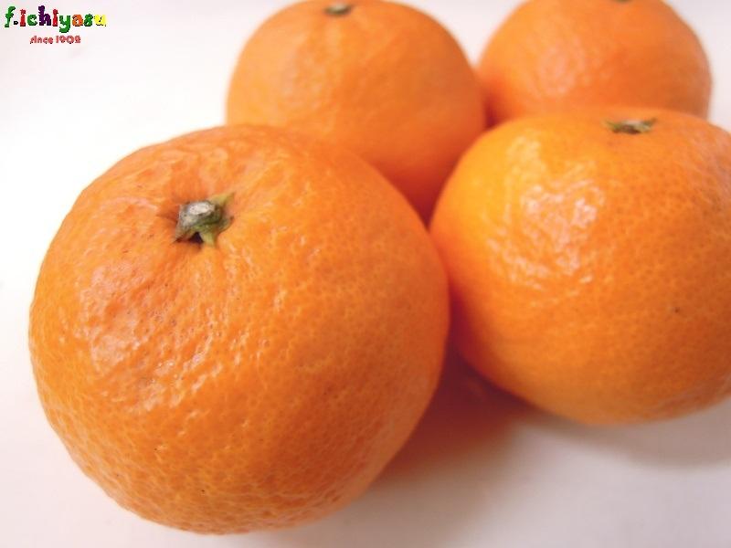 夏のみかん「南津海(なつみ)」 Today's Fruits ♪