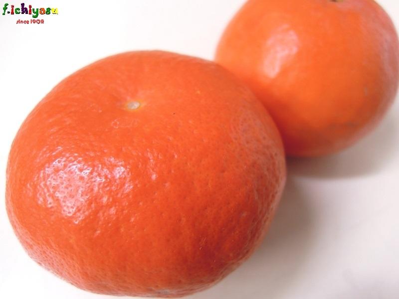 爽やかさ満載!「セミノール」 Today's Fruits ♪