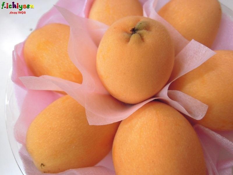 大粒のハウス枇杷「涼風」 Today's Fruits ♪