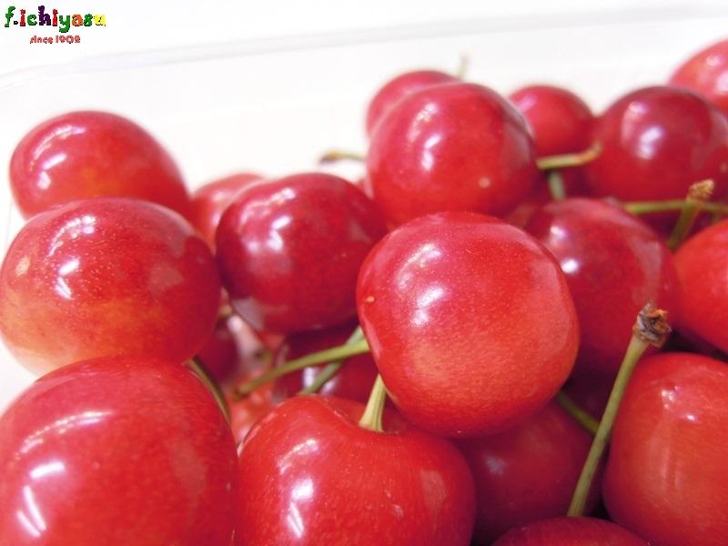 山形産サクランボ情報 Today's Fruits ♪