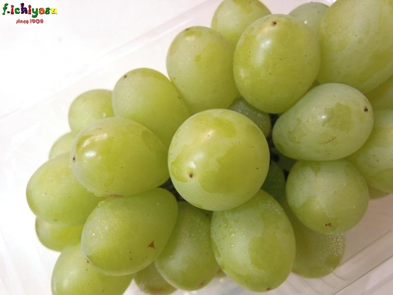山梨産の種無しブドウ「ハニービーナス」 Today's Fruits ♪