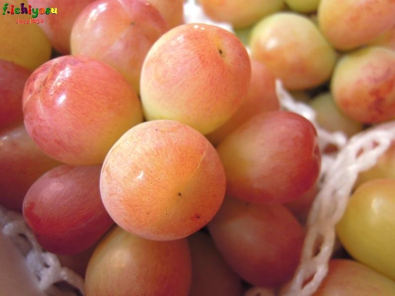レアアイテム「赤アリサ」 Today's Fruits ♪