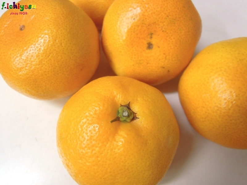 福岡・山川みかん「日南マイルド」 Today's Fruits ♪