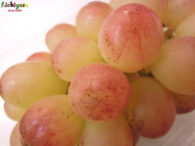 皮ごと食べられる種無しブドウ「紅環」 Today's Fruits ♪