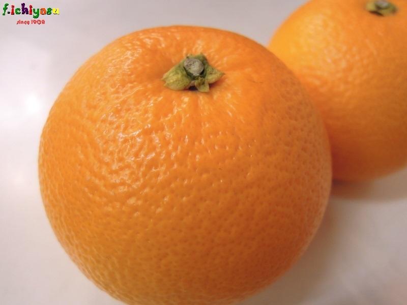 八朔も出とるよ (^^♪ Today's Fruits ♪