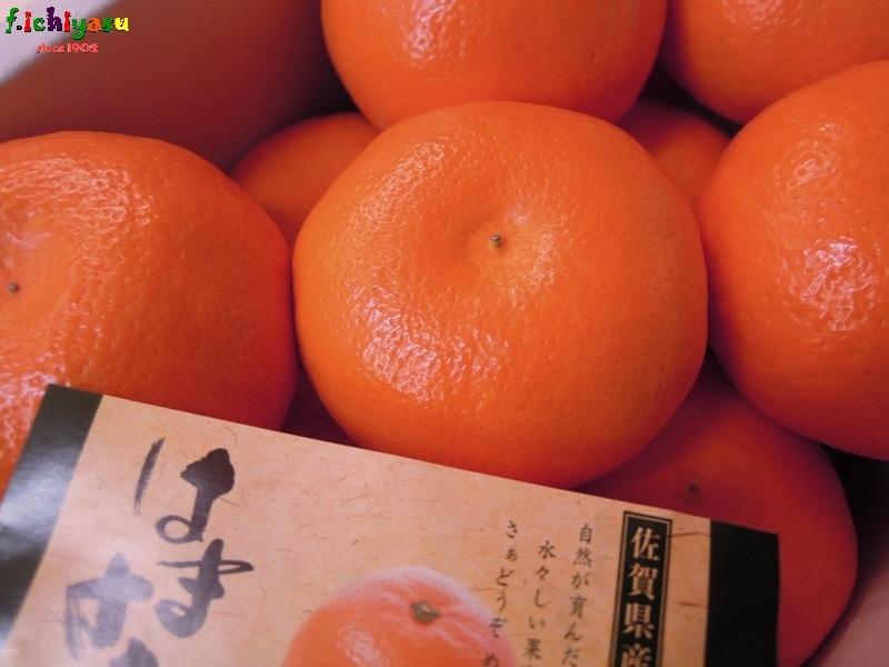 「はまさき」入荷! Today's Fruits ♪