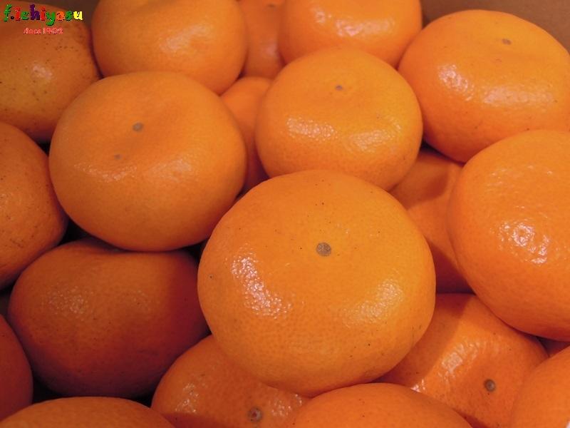 「本貯蔵 山川みかん」 Today's Fruits ♪