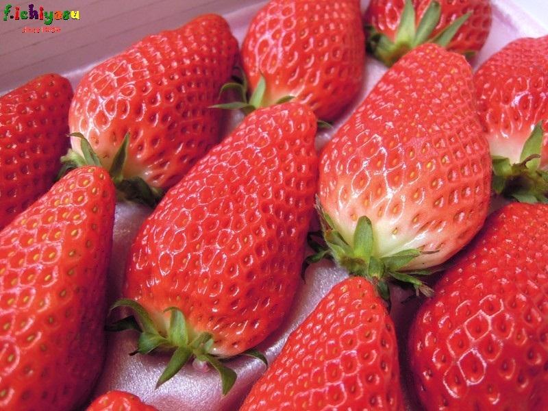 蒲郡の「サンベリー」 Today's Fruits ♪