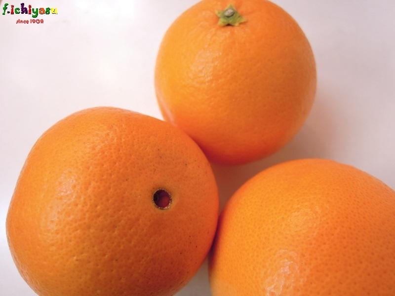 広島・大長の「ネーブルオレンジ」 Today's Fruits ♪