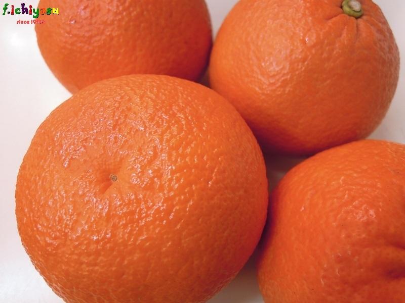 JA鹿児島いずみ「紅さわ香」 Today's Fruits ♪