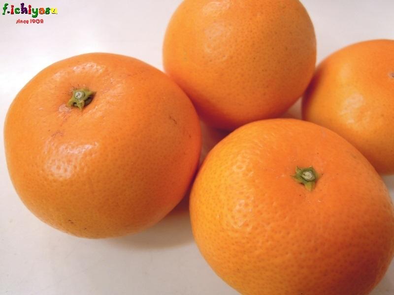 和歌山・下津の「津之香」 Today's Fruits ♪
