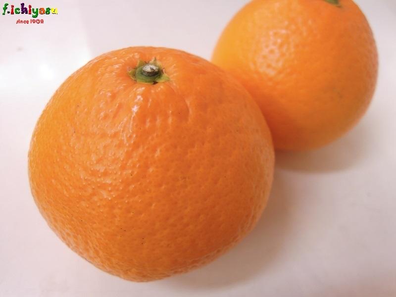 愛媛の「生成り栽培 清見タンゴール」 Today's Fruits ♪